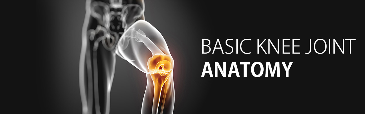 BASIC-KNEE-JOINT-ANATOMY